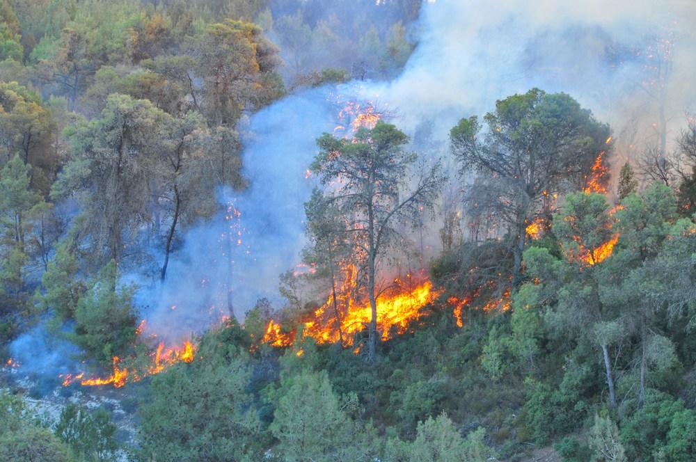 השרפה בכרמל - האש פורצת מכיוון עוספיה לכיוון מערב (צילום: איש גורדון)
