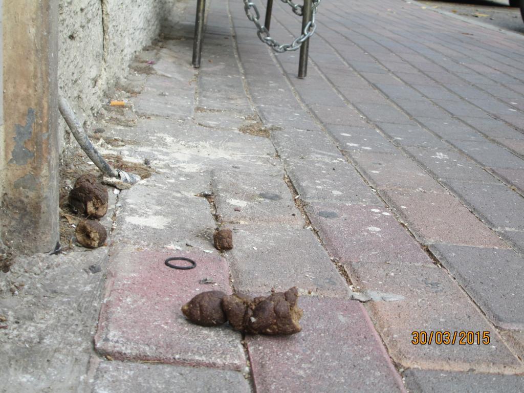 צואת כלבים ברחוב מסדה (צילום: חיים כהן)
