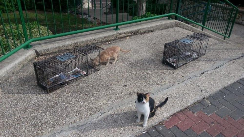 עיקור חתולי רחוב (צילום: איל לרמן)