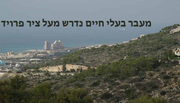 מעבר אקולוגי בין דניה לטירת הכרמל (צילום – ירון כרמי)