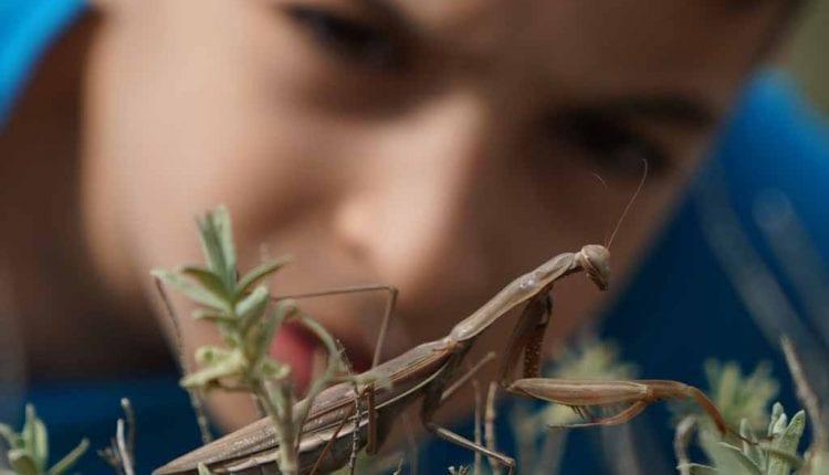 ילד מתבונן בגמל שלמה – גבעת העיזים – טבע עירוני (צילום – ירון כרמי)
