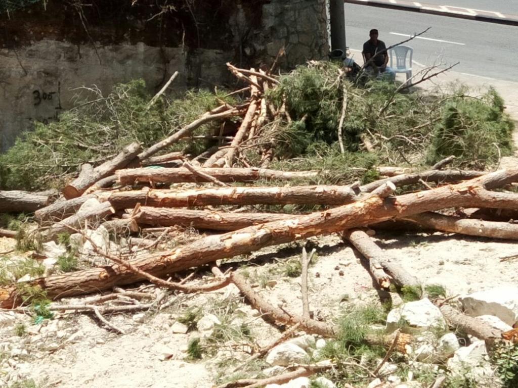 כריתת עצים במגרש לבנייה ברחוב חורב 37 – חיפה