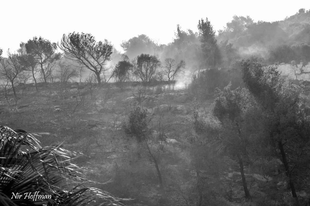 השרפה הגדולה בחיפה - מבט מגבעת אורנים לכיוון רמת אלמוגי 25/11/2016 (צילום: ניר הופמן)
