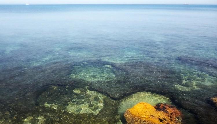 אור השמש הקייצית חודר למי הים והפריחה בעיצומה (צילום – שרה אוחיון)