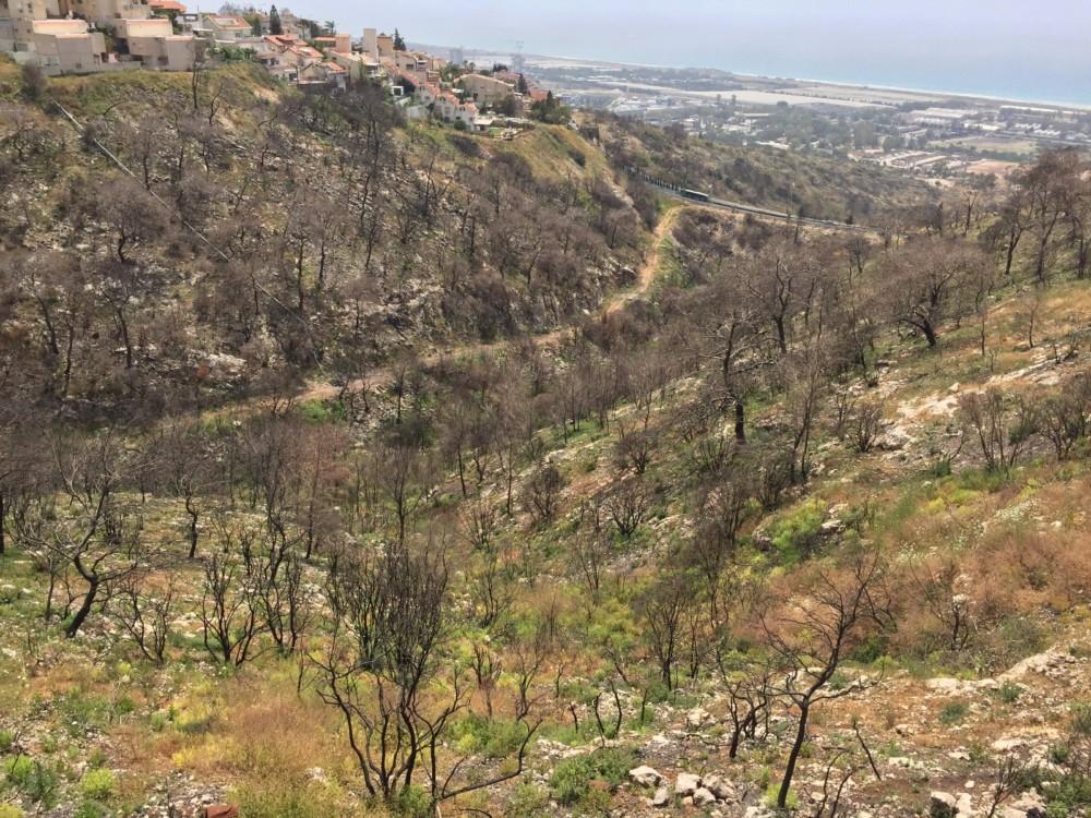 נחל אחוזה אחרי השריפה (צילום - עומרי שפר)