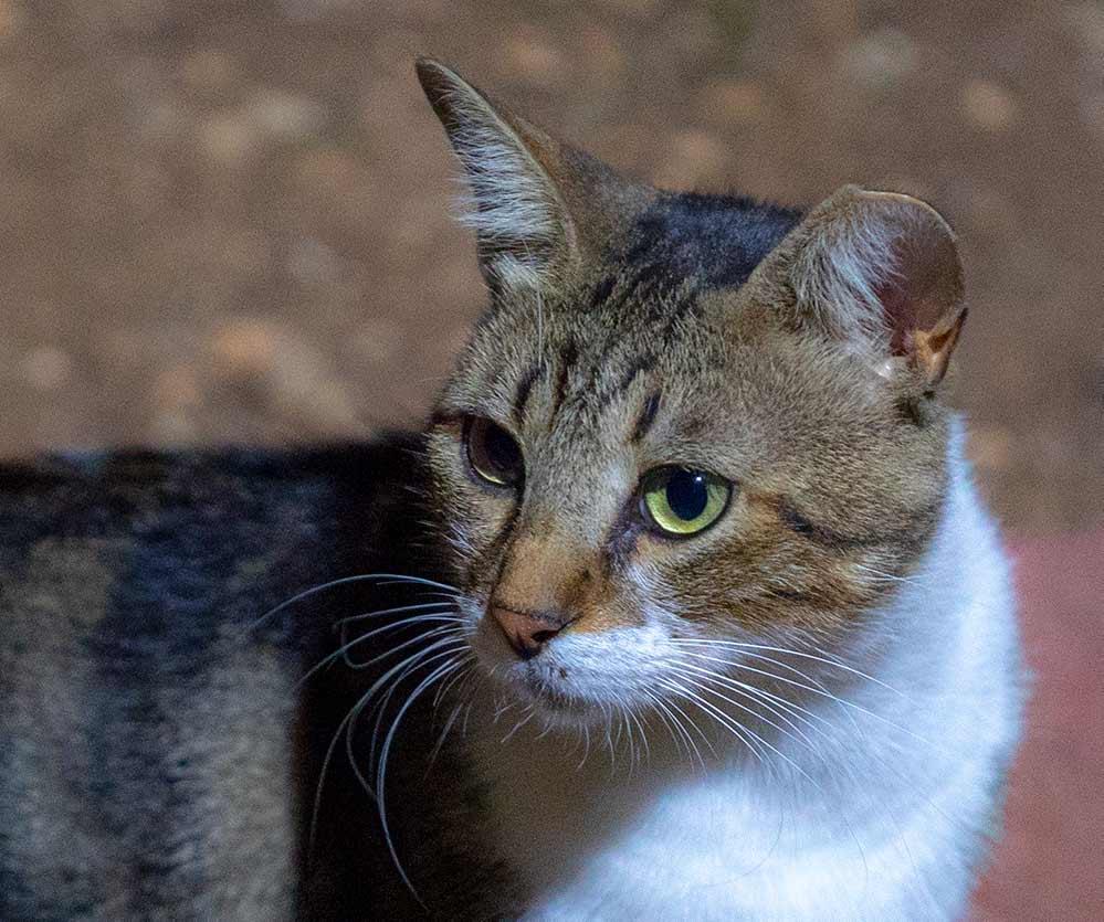 חתול (צילום - ירון כרמי)