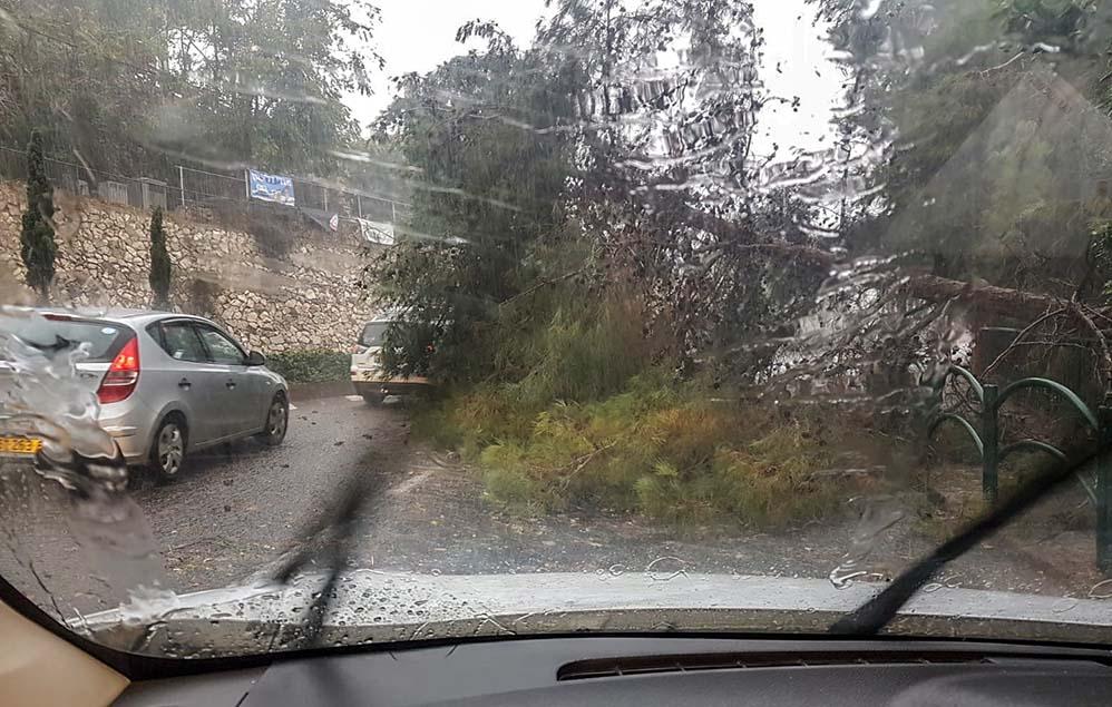 עץ נפל ברחוב ארתור בירם - קוראי חי פה מצלמים את היורה בחיפה - מטחי גשם, הצפות וברקים - 21/10/2018 (צילום: אלי אזולאי)