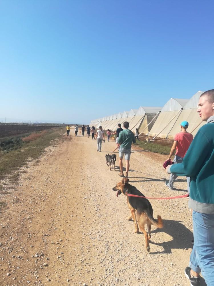 טיול כלבים (צילום:אסתר דורון)