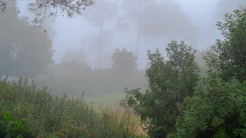 יער הכרמל בערפל - ענן על הכרמל - ערפל בעוספיה - מערכת גשם בחיפה (צילום: ירון כרמי)