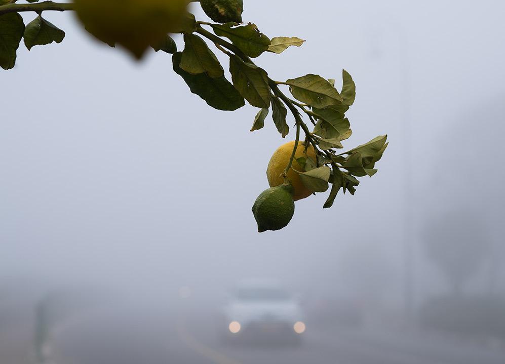 לימון - עוספיה בערפל - ענן על הכרמל - מערכת גשם בחיפה (צילום: ירון כרמי)