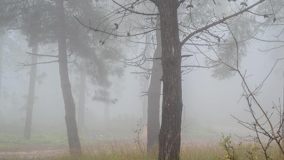 יער הכרמל בערפל - ענן על הכרמל - מערכת גשם בחיפה (צילום: ירון כרמי)