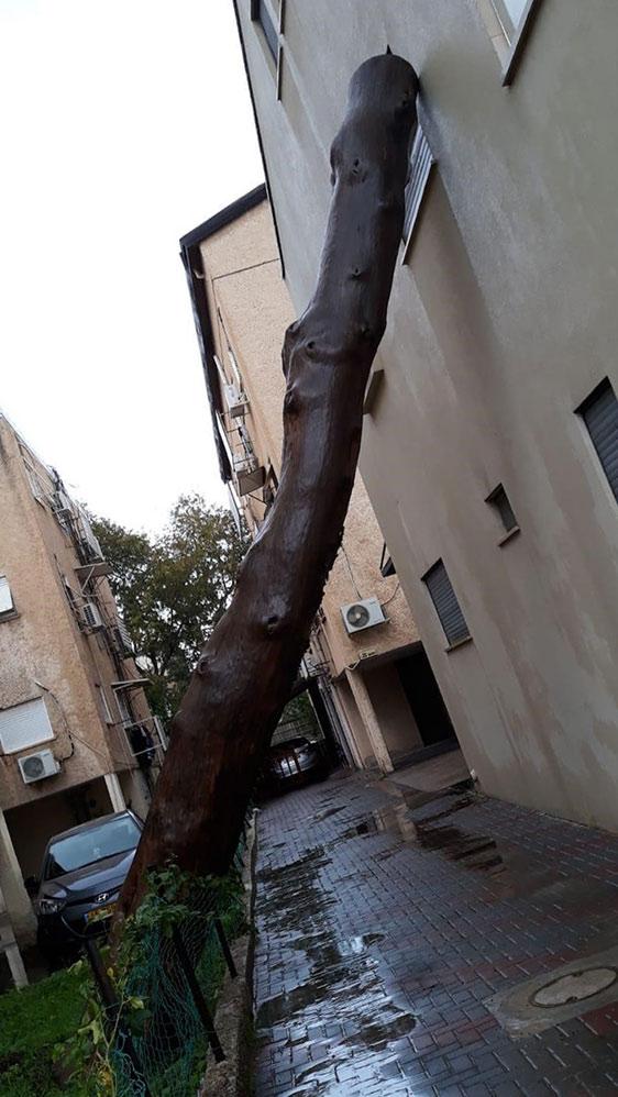 עץ נפל על קיר של בית בקריית חיים וטופל על ידי מחלקת הגנים (צילום: עיריית חיפה)