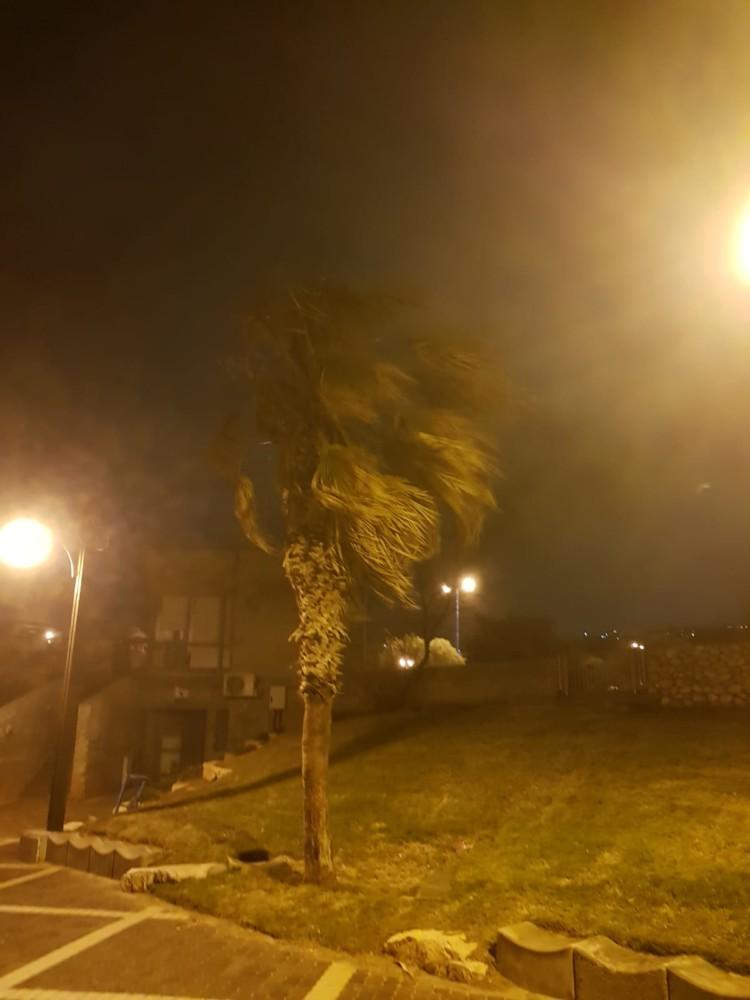 דקל ברוח - הסערה בטיילת דדו בחיפה - 16/1/2019 (צילום: מקסים גורבץ')