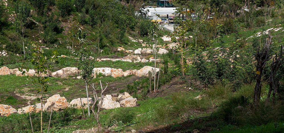 מיאנדר - סלעים בבסיס הנחל מאטים את הזרימה ומונעים סחף (צילום: ירון כרמי)