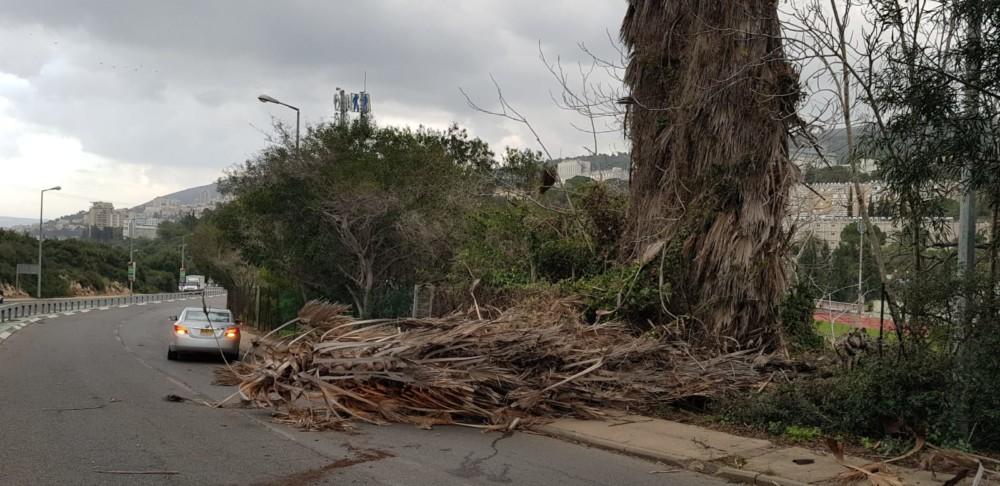 עץ קרס בכביש דורי ((צילום: איחוד הצלה כרמל)