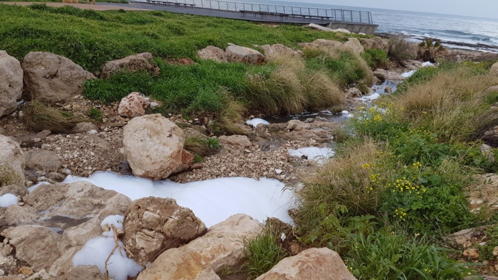 קצף בנחל העלייה (צילום:יפה בולנסקי)