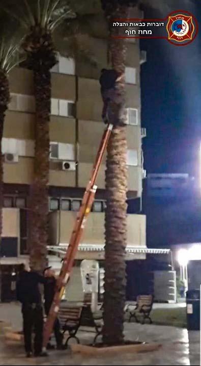 לוחמי העץ חילצו נער שטיפס ונתקע על עץ דקל בכיכר מאירהוף בחיפה (צילום: דוברות כבאות והצלה - מחוז חוף)