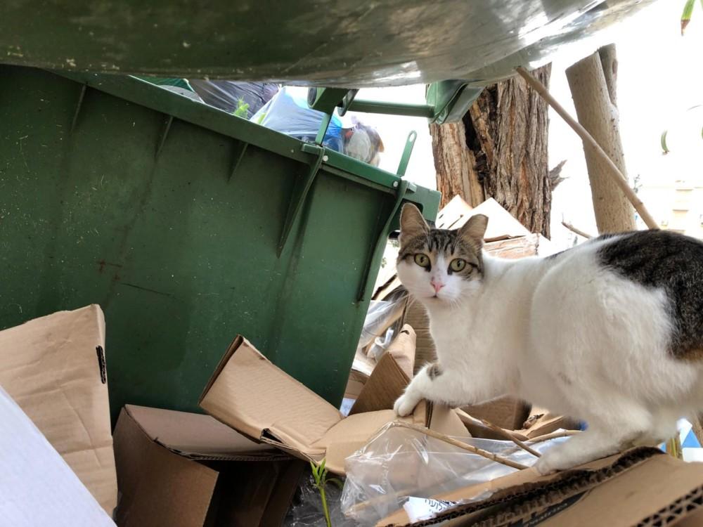 חתול נהנה מהשביתה בחיפה (צילום: ירון כרמי)