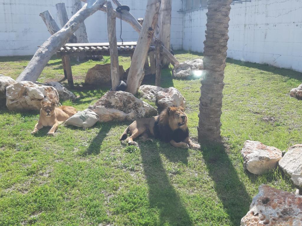 גן חיות מוצקין (צילום עיריית מוצקין)