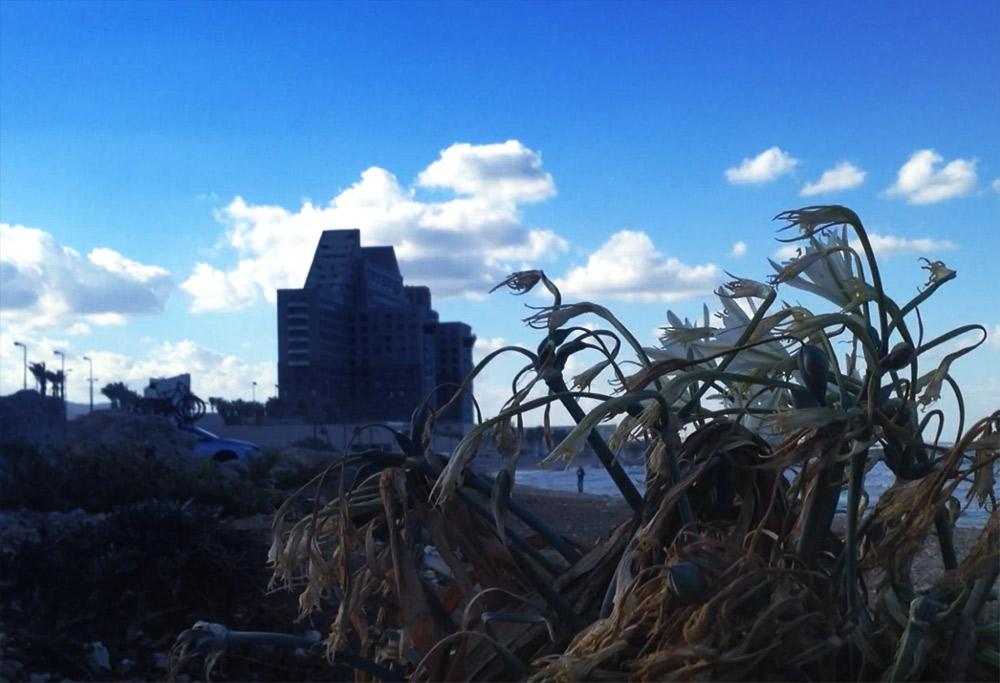 מגדלי חוף הכרמל (צילום: ירון כרמי)