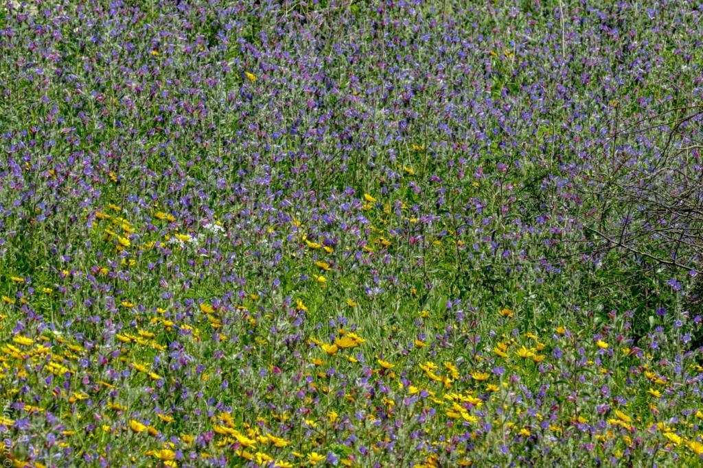 מרבדי פרחים - טיול חורף בנחל שיח בחיפה - התמונות ומסלול הטיול (צילום: גלעד שטיין)