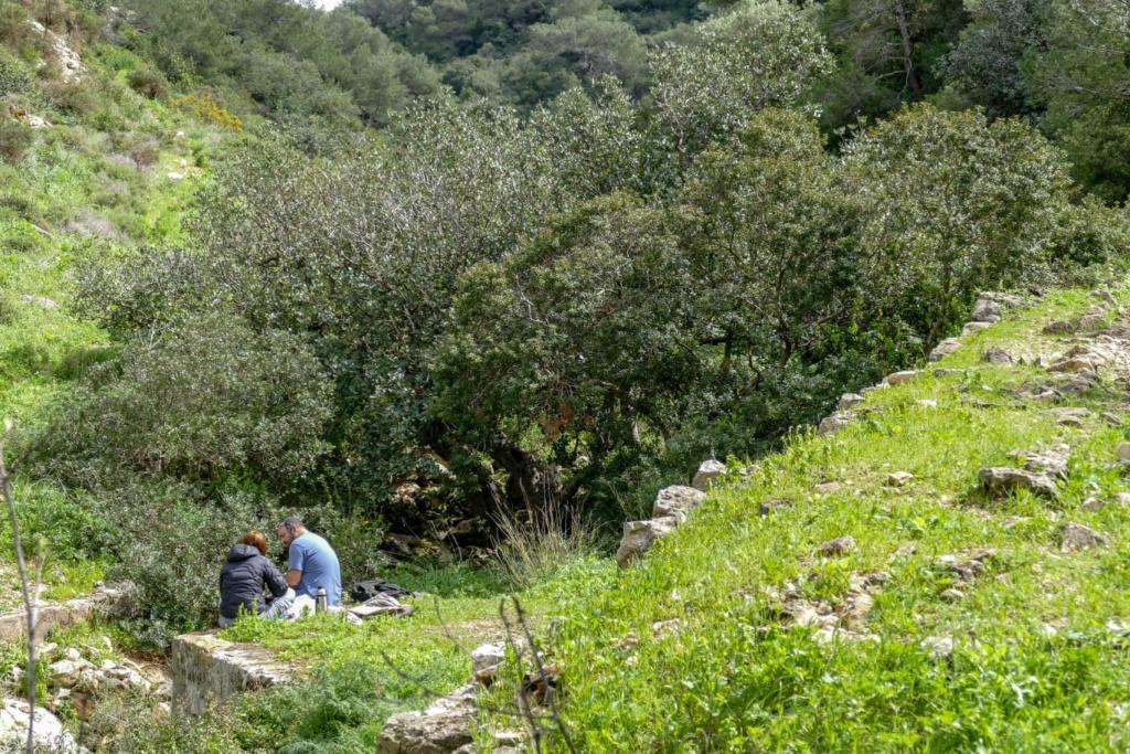 נחל שיח - טיול חורף בנחל שיח בחיפה - התמונות ומסלול הטיול (צילום: גלעד שטיין)
