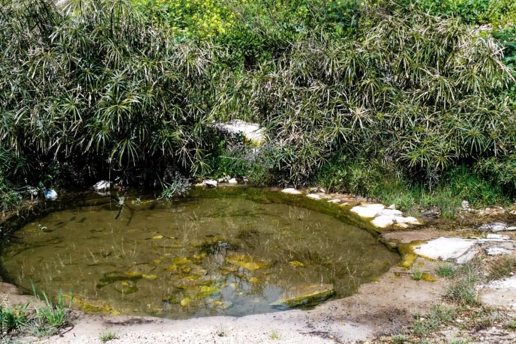 בריכת מים בנחל שיח - טיול חורף בנחל שיח בחיפה - התמונות ומסלול הטיול (צילום: גלעד שטיין)