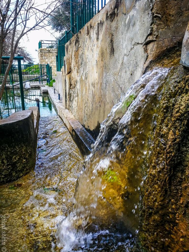 זרימה בנחל שיח - טיול חורף בנחל שיח בחיפה - התמונות ומסלול הטיול (צילום: גלעד שטיין)