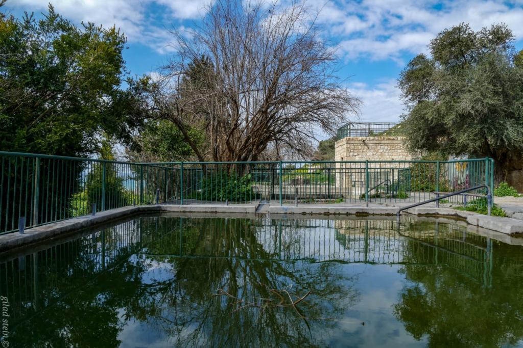 בריכות בוסתן כיאט בנחל שיח - טיול חורף בנחל שיח בחיפה - התמונות ומסלול הטיול (צילום: גלעד שטיין)