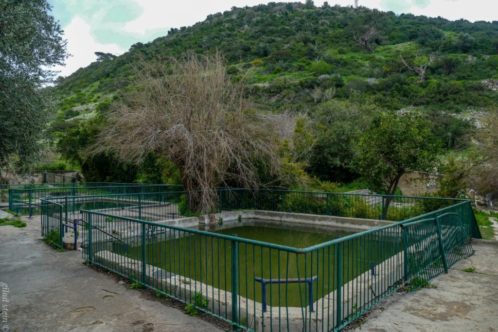 בריכות בנחל שיח - טיול חורף בנחל שיח בחיפה - התמונות ומסלול הטיול (צילום: גלעד שטיין)