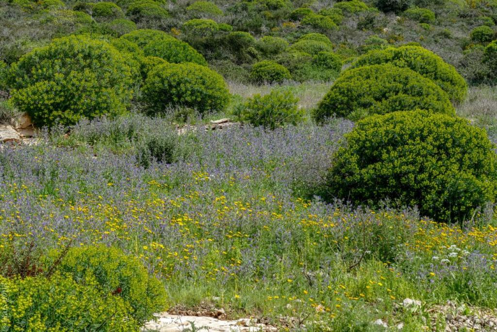 מרבדי פרחים בנחל שיח - טיול חורף בנחל שיח בחיפה - התמונות ומסלול הטיול (צילום: גלעד שטיין)