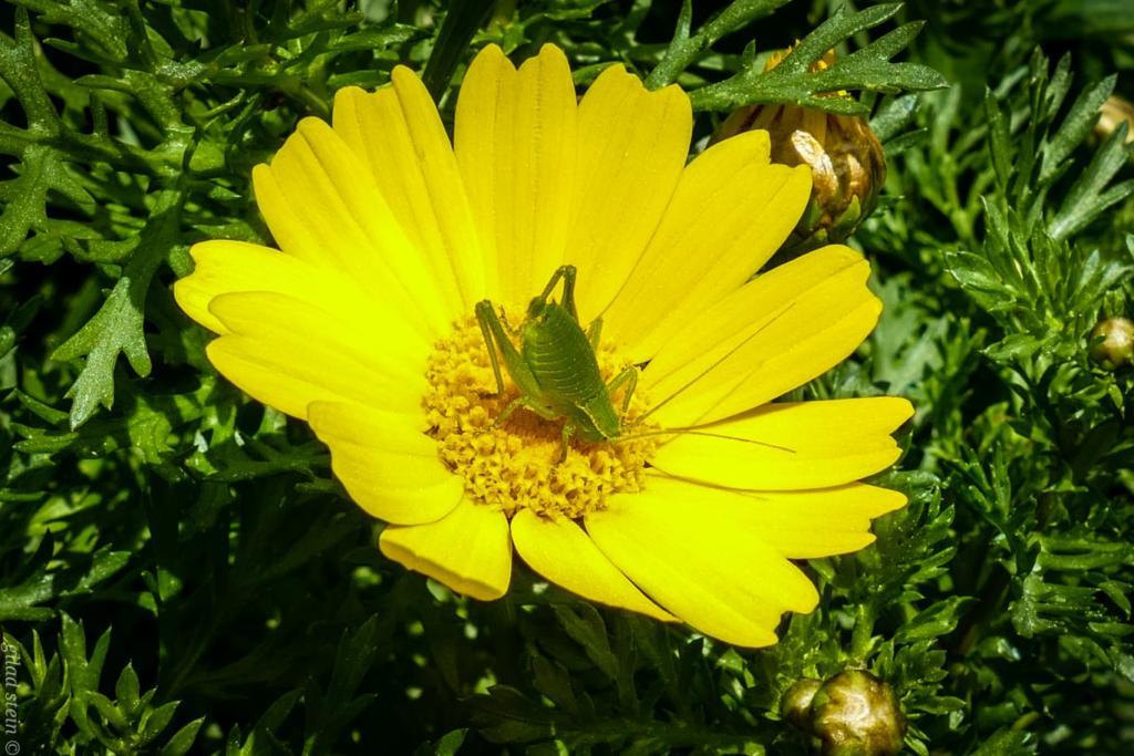 חרק על פרח חרצית - טיול חורף בנחל שיח בחיפה - התמונות ומסלול הטיול (צילום: גלעד שטיין)