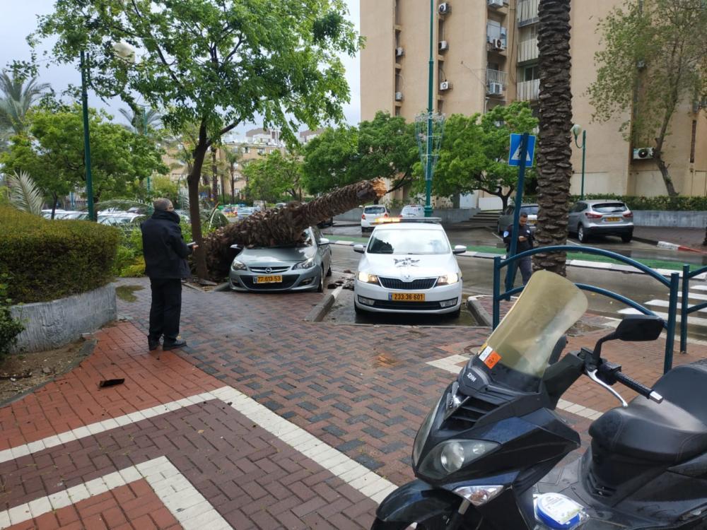 עץ דקל קרס על מכונית בקריית ים (צילום: עיריית קריית ים)