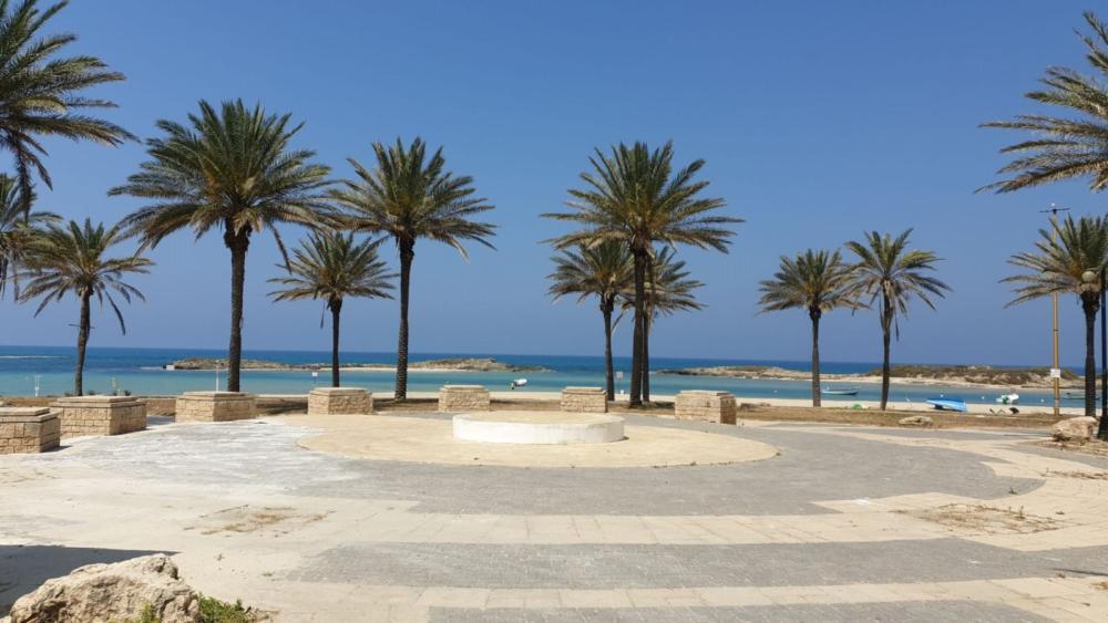 חוף דור (קרדיט: אנשי הים תיכון)