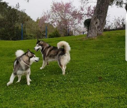 ארייה וסקאדי משחקות (צילום: יהודית סלע)