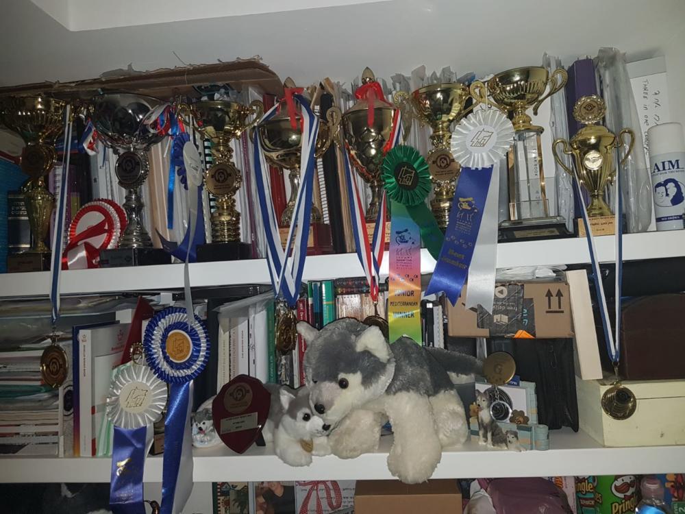 ארון הגביעים והזכיות של הכלבים של יהודית סלע (צילום: יהודית סלע)