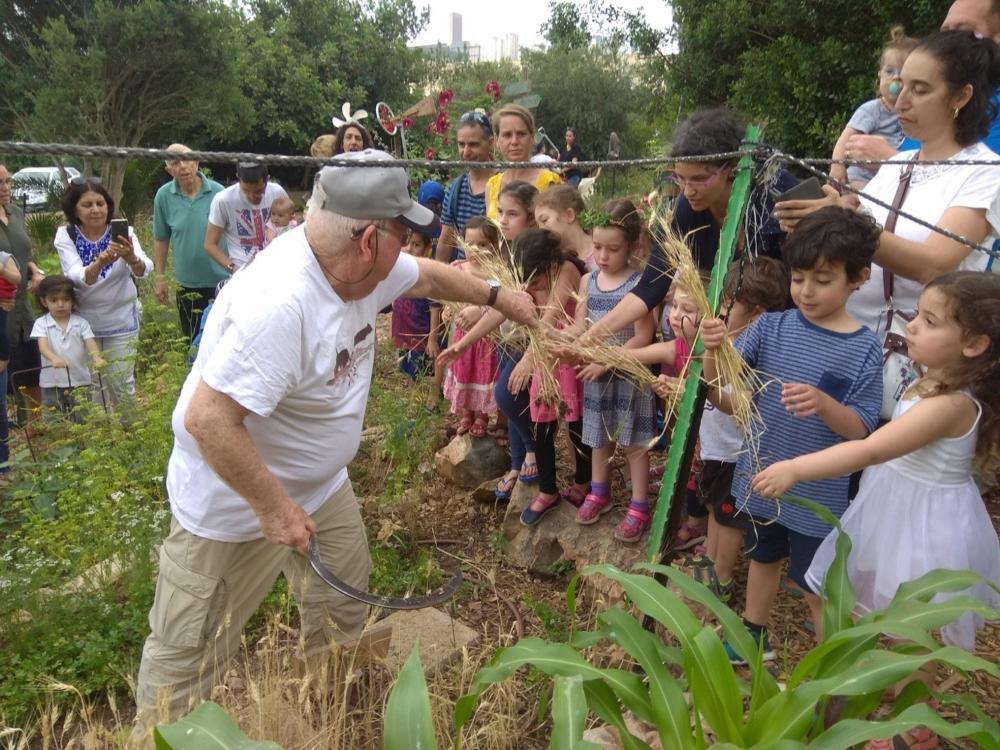 בחג שבועות מגיעות משפחות עם ילדים קטנים לקטוף את הביכורים בגינה ולקצור את החיטה (צילום: פנינה מדן)
