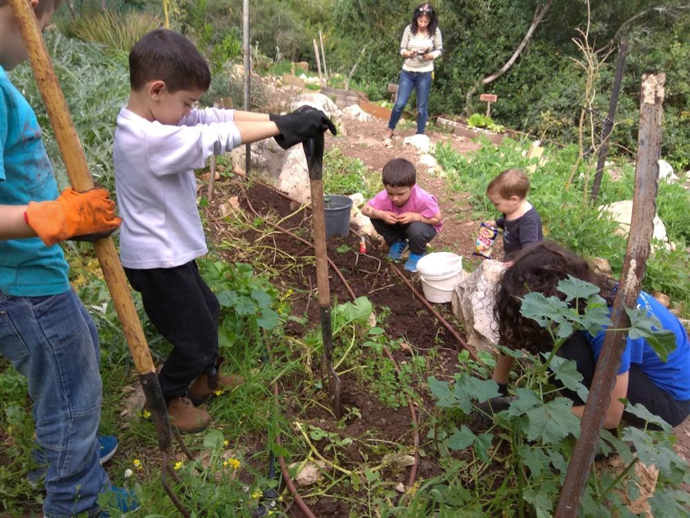 ילדים קטנים ומשפחותיהם מוזמנים לקטוף את הביכורים בגינה (צילום: פנינה מדן)