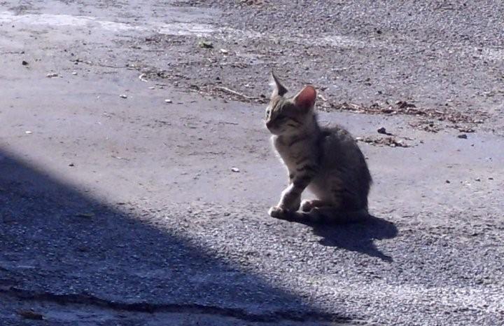 גור חתולים (צילום: סמר עודה כרנתינג'י)
