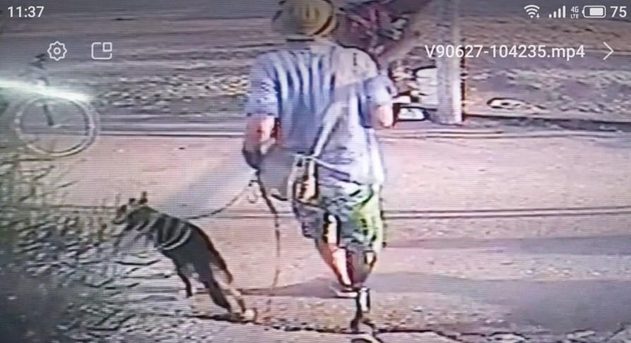 קרמבו נגנב מאגודת צער בעלי חיים בחיפה