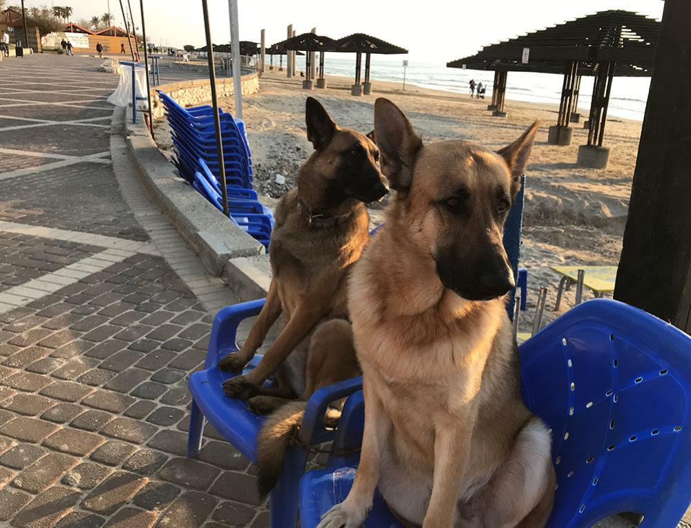 כלבים בטיילת דדו (צילום: נגה כרמי)