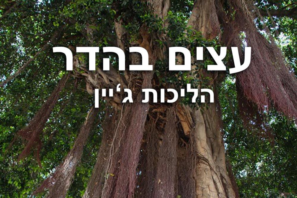 עצים בהדר עליון בחיפה. טבע-עירוני-בין-מקומי-ולא-מקומי - דנה הרצברג