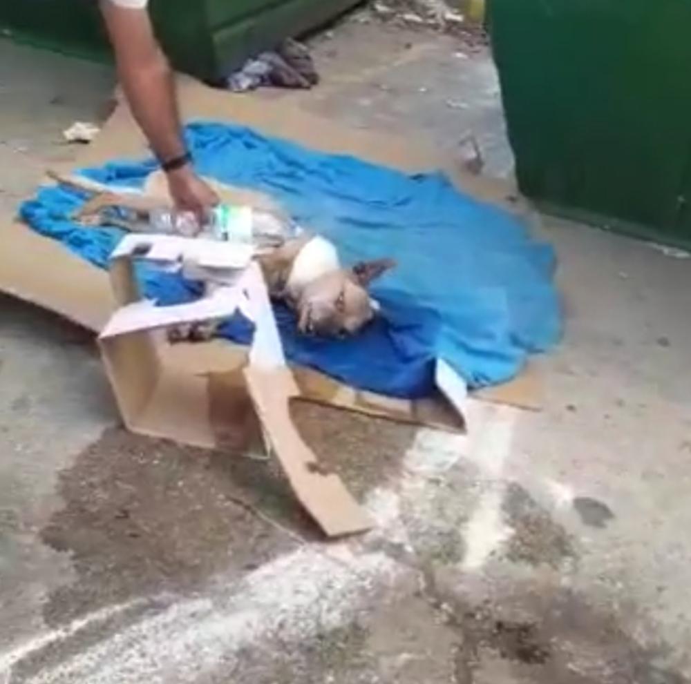 הכלבה ג'סיקה שנמצאה בפח