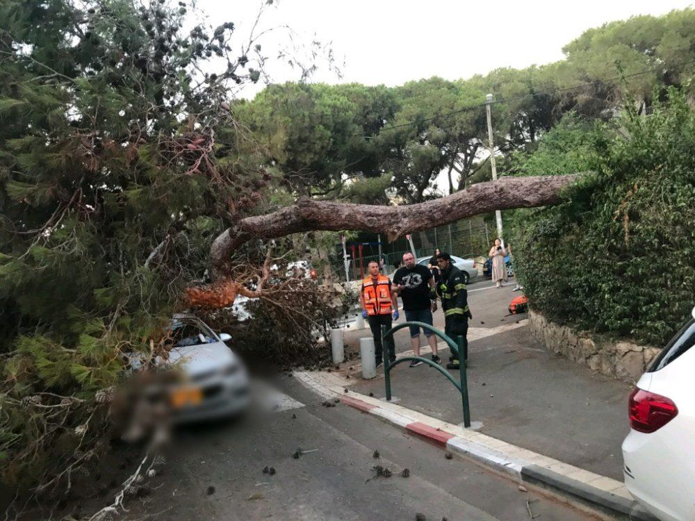 עץ קרס על רכב שהיה בנסיעה ברחוב שומרון בחיפה - שני נפגעים (צילום: איחוד הצלה)