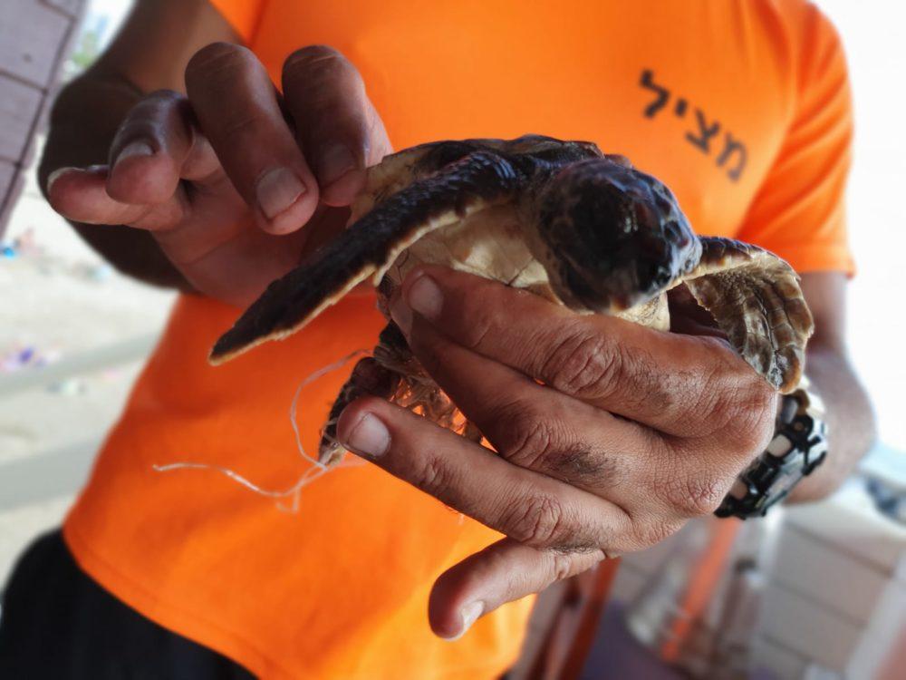 צב ים צעיר הסתבך בפלסטיק וחולץ על ידי אזרחים ומצילים בחיפה (צילום: מצילי חיפה - אגף החופים)