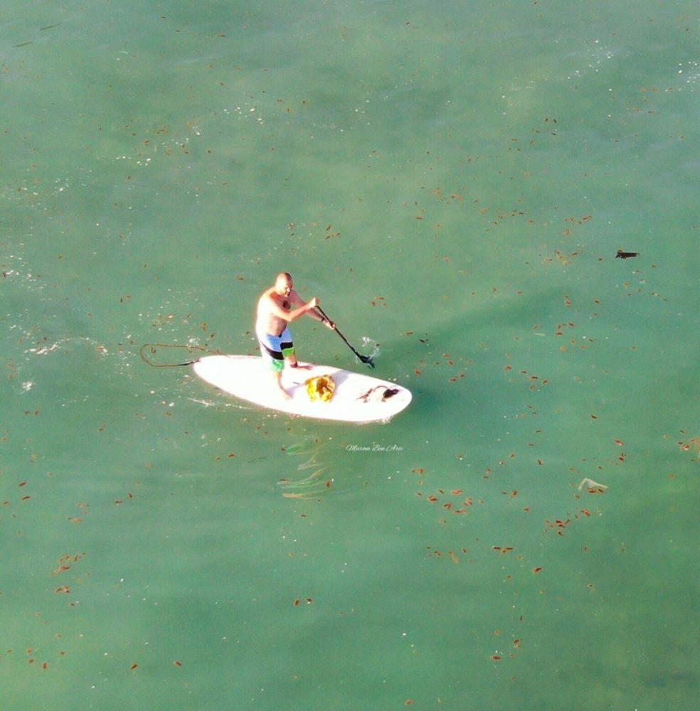 גולשים, נהנים ומנקים את חופי חיפה (צילום: מרום בן אריה)
