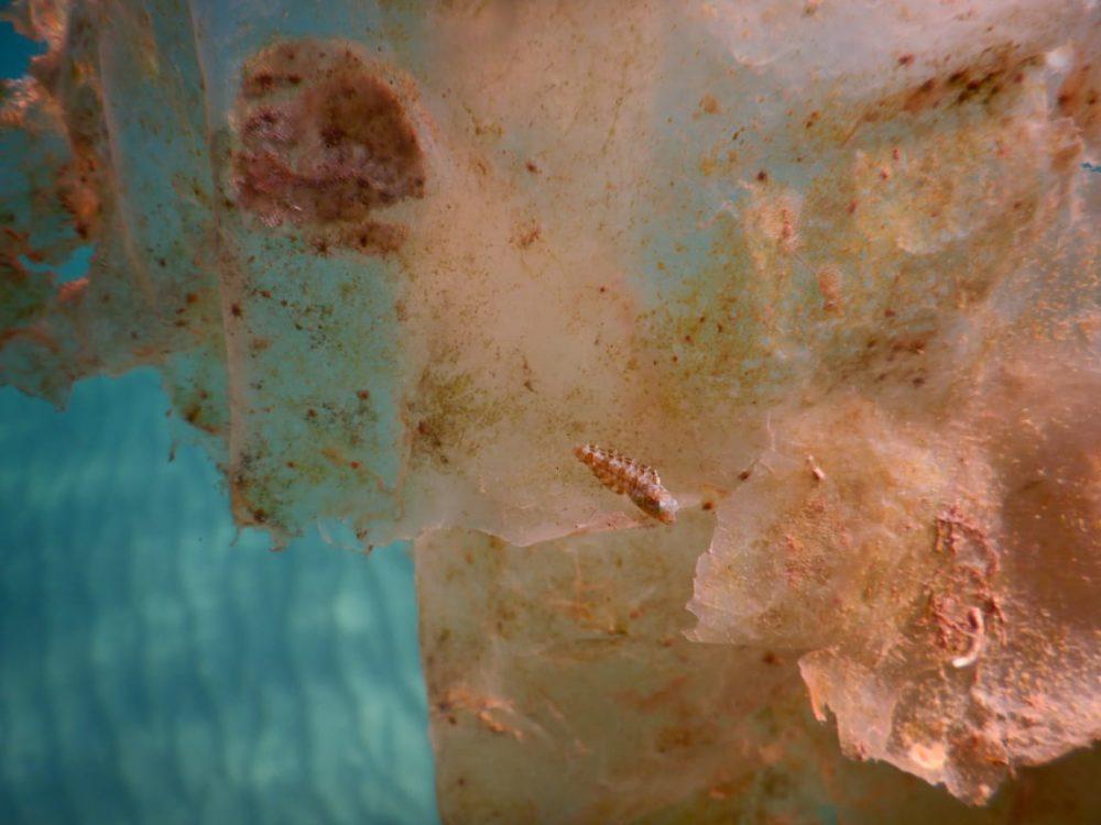 דג קרנון (צילום: מוטי מנדלסון)