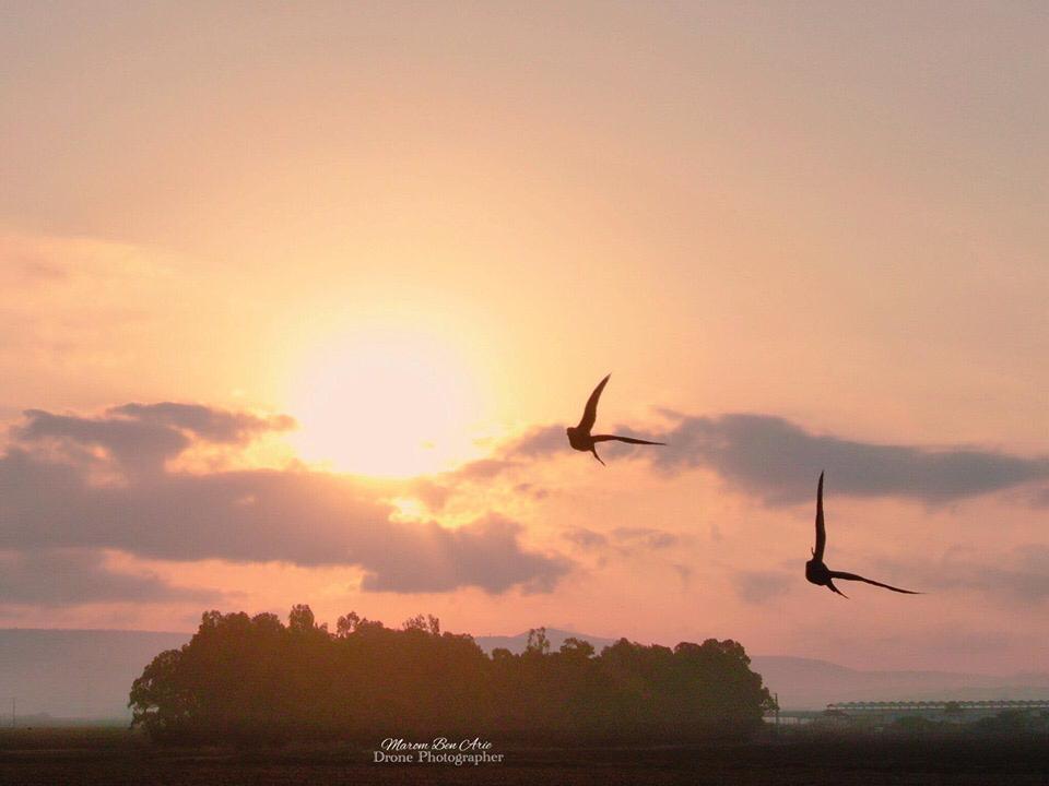 שקנאים (מרום בן אריה – צילומי אוויר 054-869-4777)