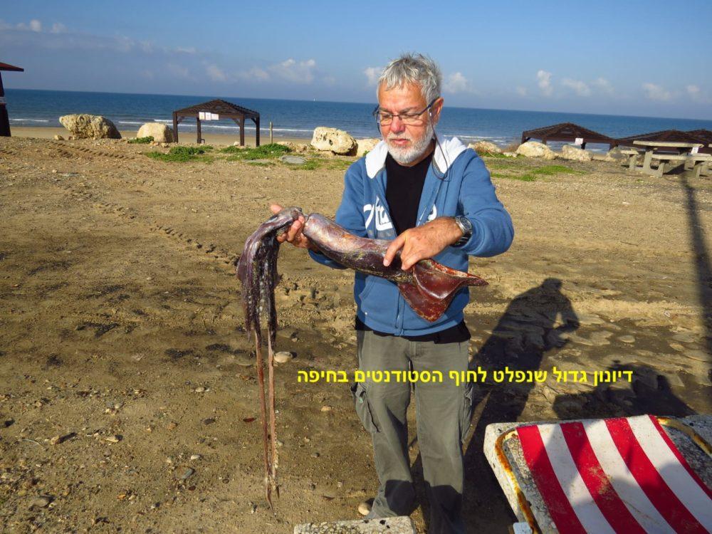 דיונון גדול שנפלט לחוף הסטודנטים בחיפה (צילום: מוטי מנדלסון)