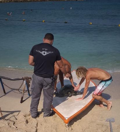 """הצלת צב ע""""י המצילים בחוף בת גלים חיפה (צילום: ג׳ודי חדיד אגף החופים)"""